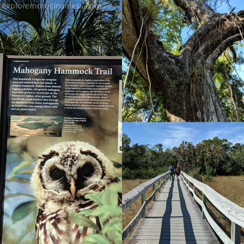 Mahogany Hammock Trail everglades florida
