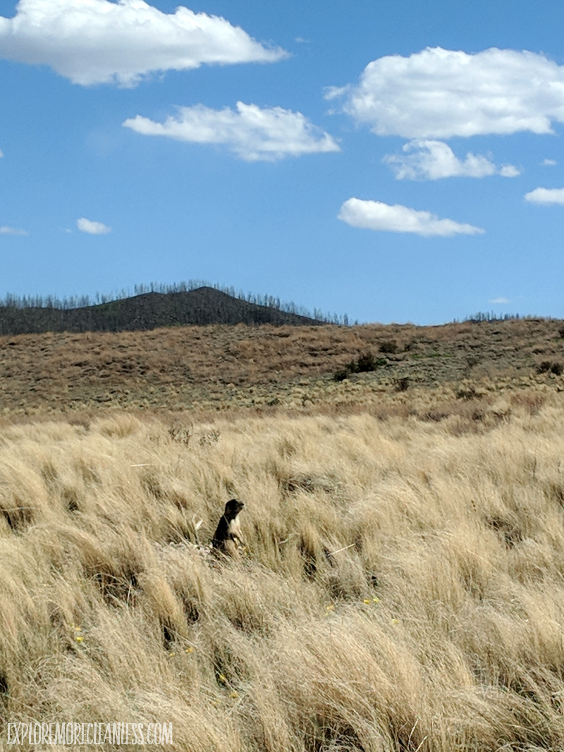 prairie dog valles caldera