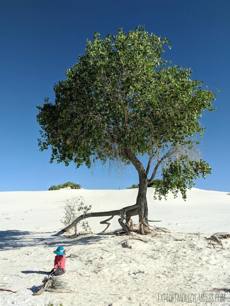 tree white sands national monument